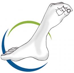 לוגו קינסיולוגיה ואנטומיה חדש - יולי 2021 - Copy (3)